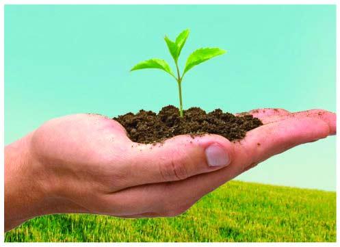 Prefeitura realiza doação de mudas de árvores em comemoração ao dia do meio ambiente