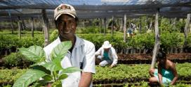 Anvisa disponibiliza curso gratuito de boas práticas de manipulação em serviços de alimentação