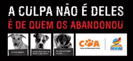 Prefeitura Municipal promove Feira de Adoção de cães adultos e filhotes
