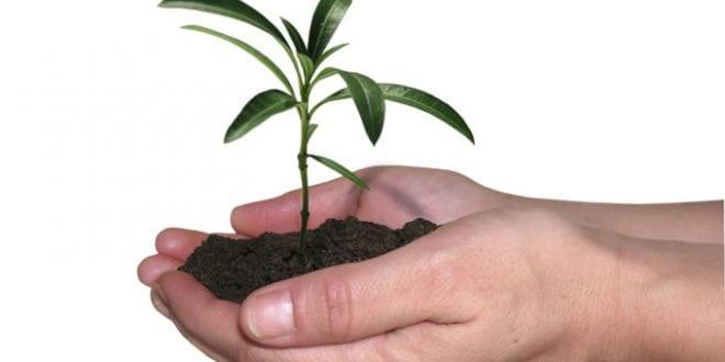 Prefeitura realiza plantio de palmeiras no bairro Flor do Campo