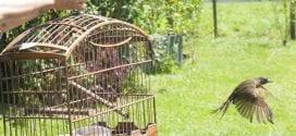 Tremembé estuda implantação de um viveiro de soltura de animais no município