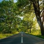 arborizacao-rodovias-675x379
