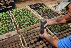 Inauguração: Tremembé terá 1º viveiro municipal de mudas nativas