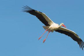 Meio Ambiente registra 315 espécies de aves em Tremembé